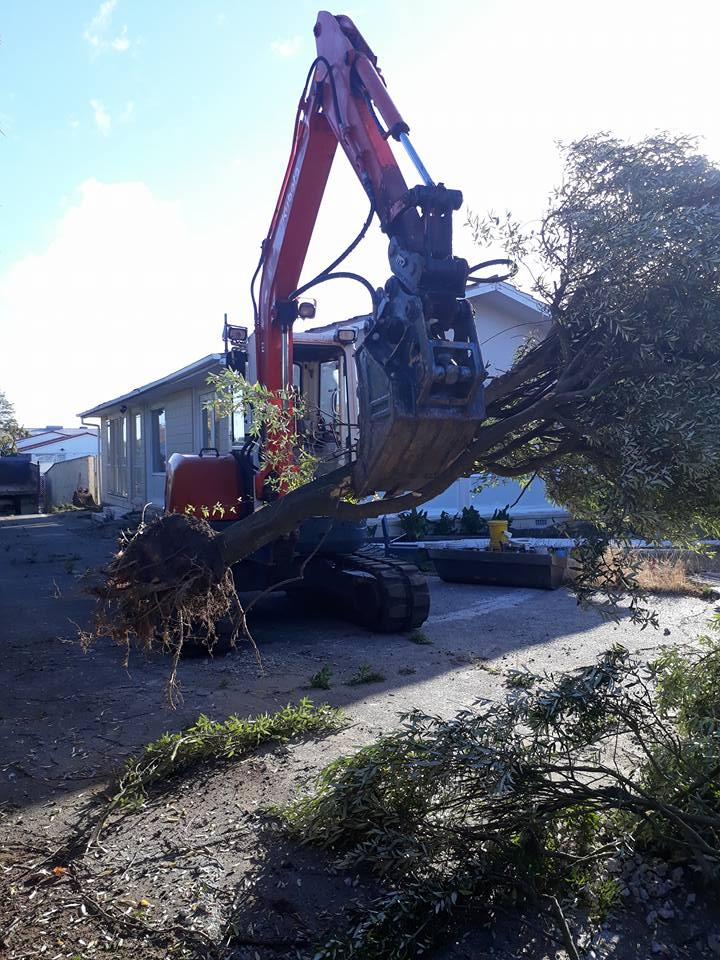 tree is no match for the mighy kubota