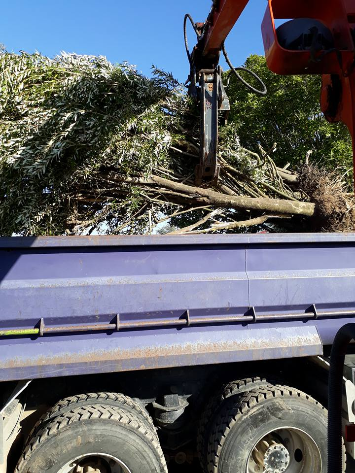 Trees loaded onto truck ready to be taken to the tip